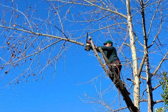 Travaux d'élagage des arbres